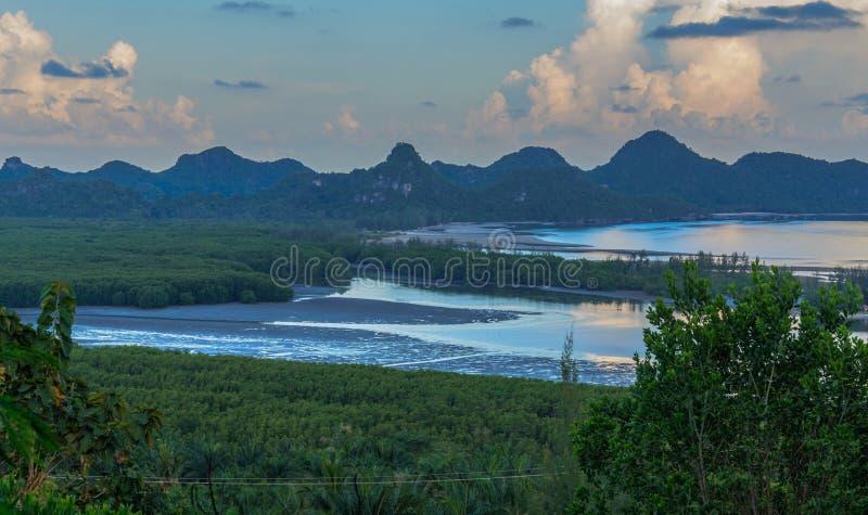 Bosque del mangle en puesta del sol fotos de archivo
