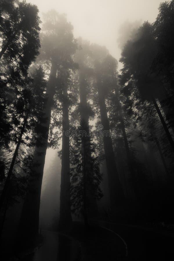 Bosque del misterio fotos de archivo libres de regalías