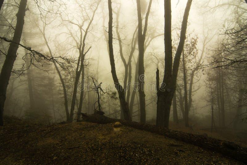 Bosque del misterio imagen de archivo libre de regalías