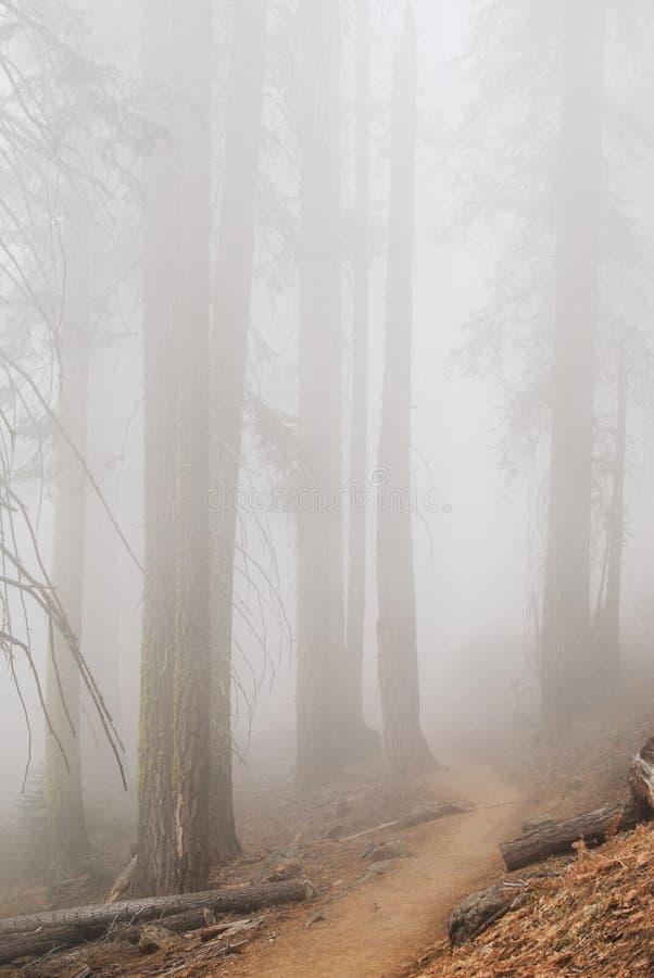 Bosque del misterio en la niebla densa, Yosemite fotografía de archivo