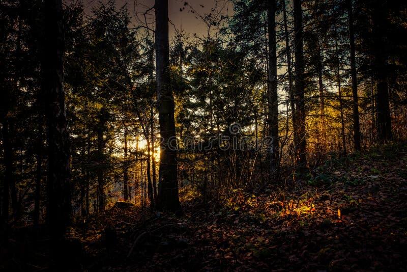 Bosque del misterio por la tarde imagen de archivo libre de regalías