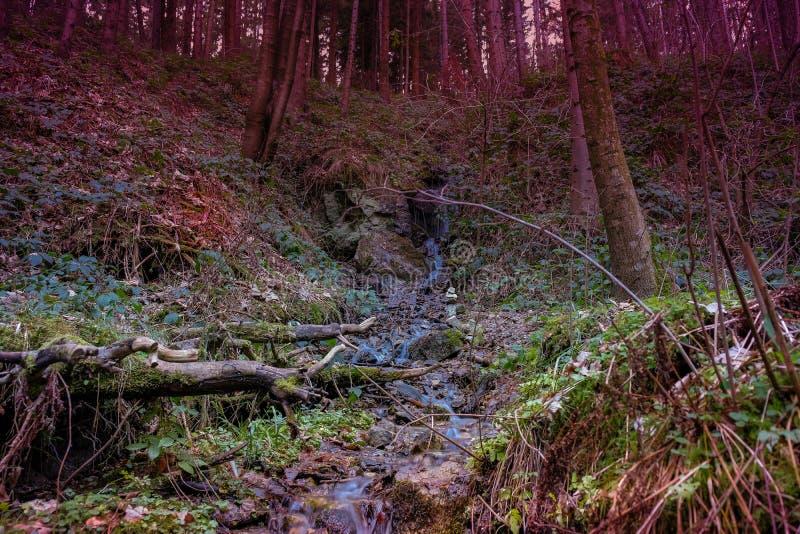 Bosque del misterio por la tarde fotos de archivo