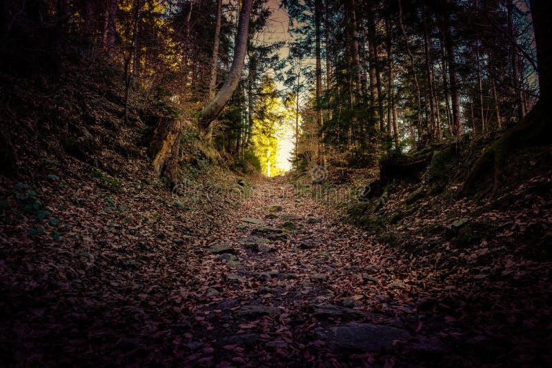 Bosque del misterio por la tarde imagenes de archivo