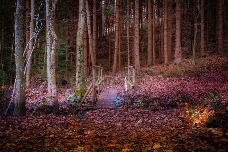 Bosque del misterio por la tarde imagen de archivo