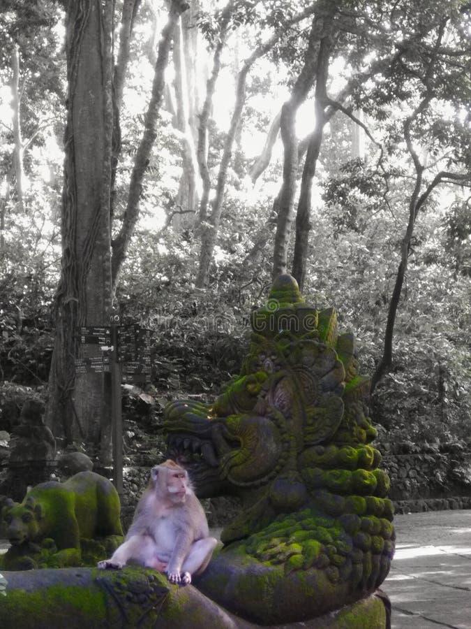 Bosque del mono imagen de archivo