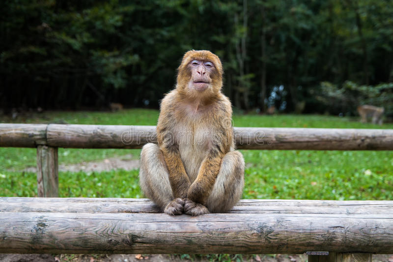 Bosque del mono - haciendo muecas imagenes de archivo