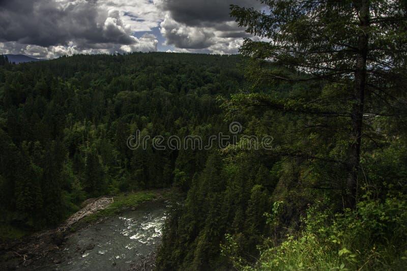Bosque del noroeste pacífico, en donde Sasquatch vaga por foto de archivo libre de regalías