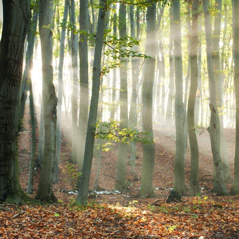 Bosque del otoño imagen de archivo
