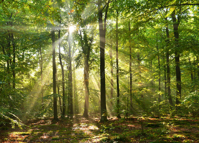 Bosque del otoño fotografía de archivo