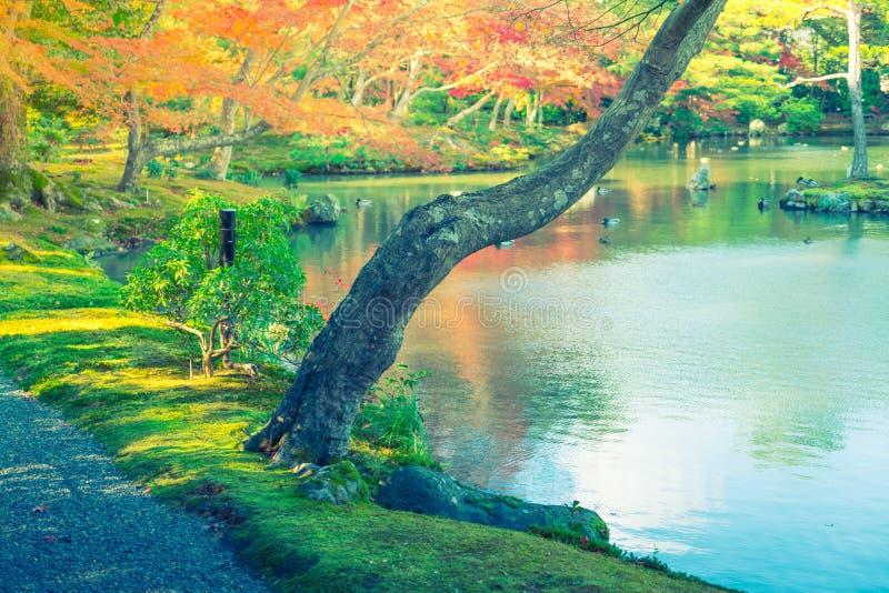 Bosque del otoño con el río imagen de archivo