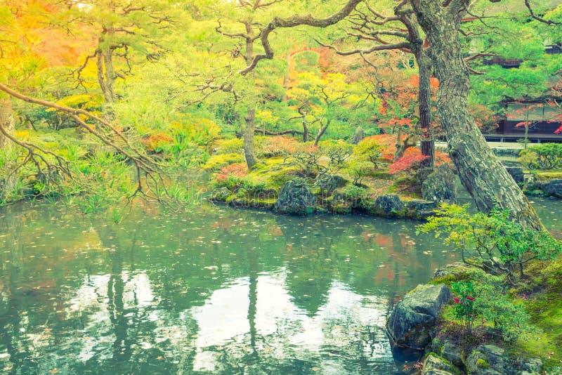 Bosque del otoño con el río (effe procesado imagen filtrado del vintage fotos de archivo libres de regalías