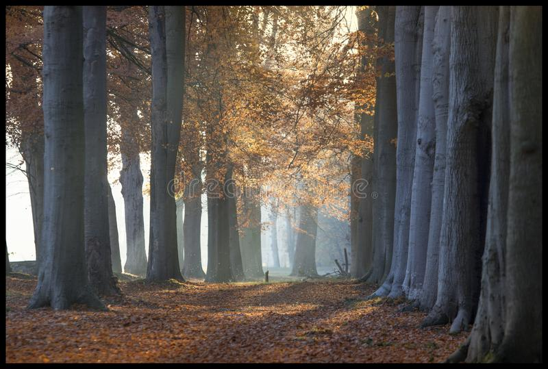 Bosque del otoño con las hojas caidas imagen de archivo libre de regalías