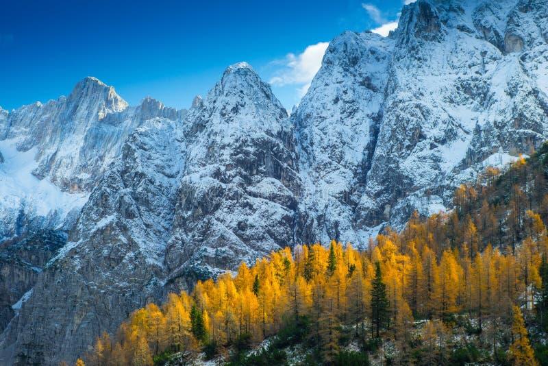 Bosque del otoño con los pinos y los alerces Rocas Nevado imágenes de archivo libres de regalías