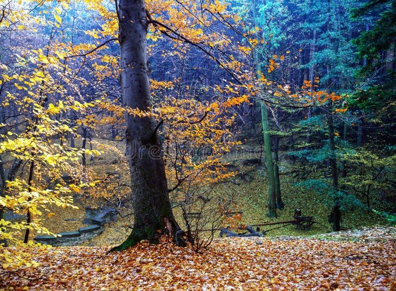 Bosque del otoño con los rayos del sol fotografía de archivo