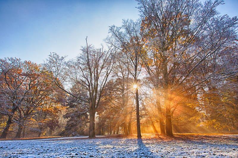 Bosque del otoño cubierto con el primer polvo de la nieve Paisaje rural hermoso imágenes de archivo libres de regalías