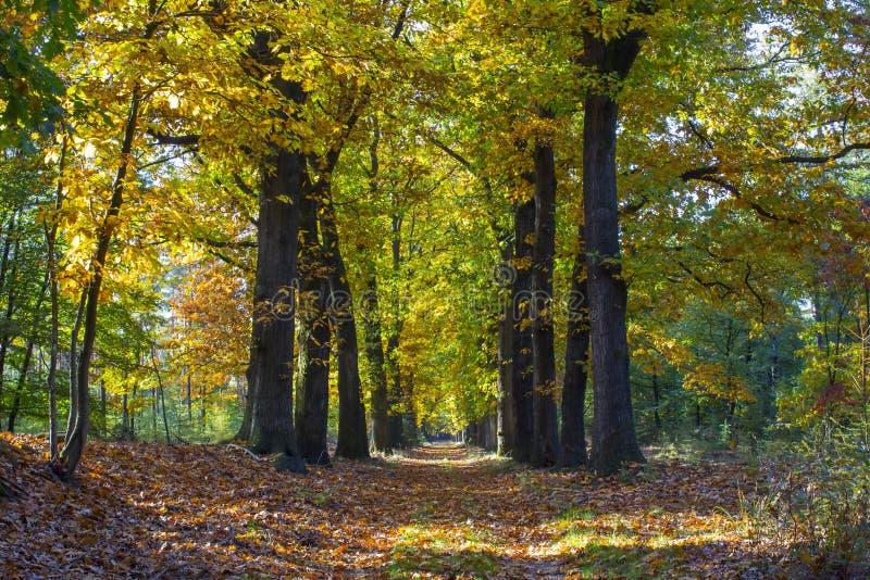 Bosque del otoño en el parque nacional De hoge Veluwe, Netherla fotos de archivo libres de regalías
