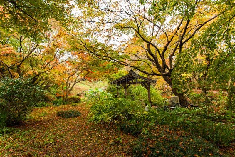 Bosque del otoño en Japón fotos de archivo