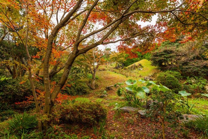 Bosque del otoño en Japón foto de archivo libre de regalías