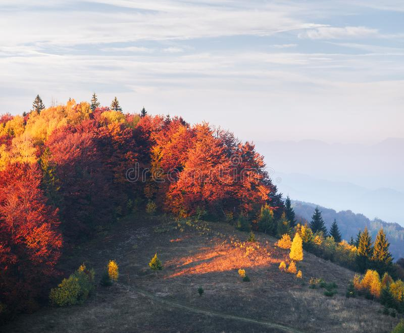 Bosque del otoño en la colina foto de archivo
