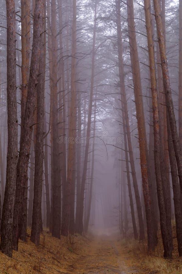 Bosque del otoño en la niebla de la mañana imagen de archivo libre de regalías