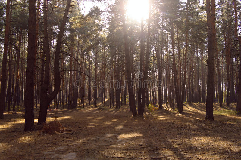 Bosque del otoño en la niebla de la mañana foto de archivo libre de regalías