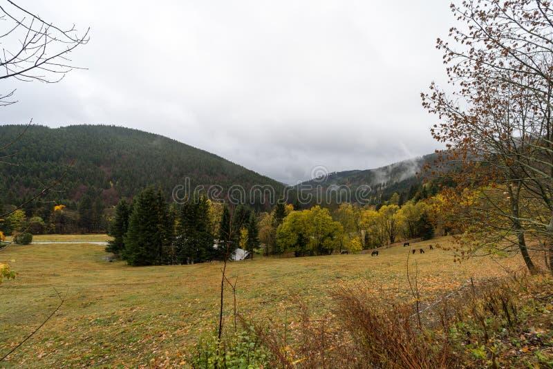 Bosque del otoño en las cuestas de las montañas de Krkonose fotos de archivo