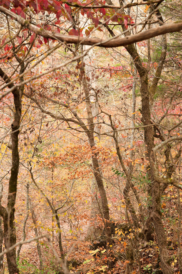 Bosque del otoño o de la caída imágenes de archivo libres de regalías