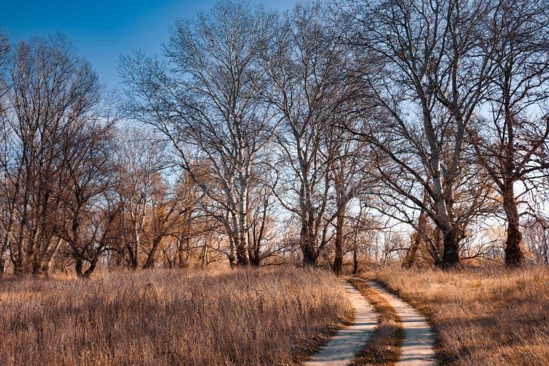 Bosque del otoño, paisaje hermoso brillante, hojas del amarillo y tre fotografía de archivo libre de regalías