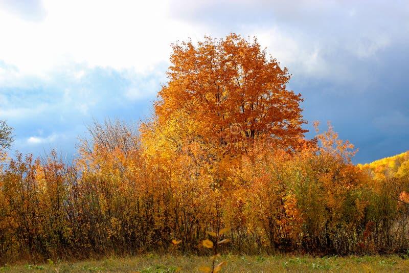 Bosque del otoño por la tarde foto de archivo