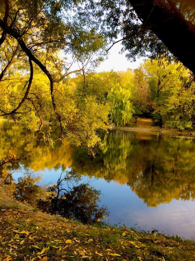 Bosque del otoño reflejado en el agua fotografía de archivo libre de regalías