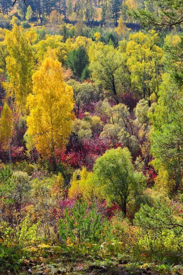 Bosque del otoño Tiro vertical El marchitar hermoso foto de archivo