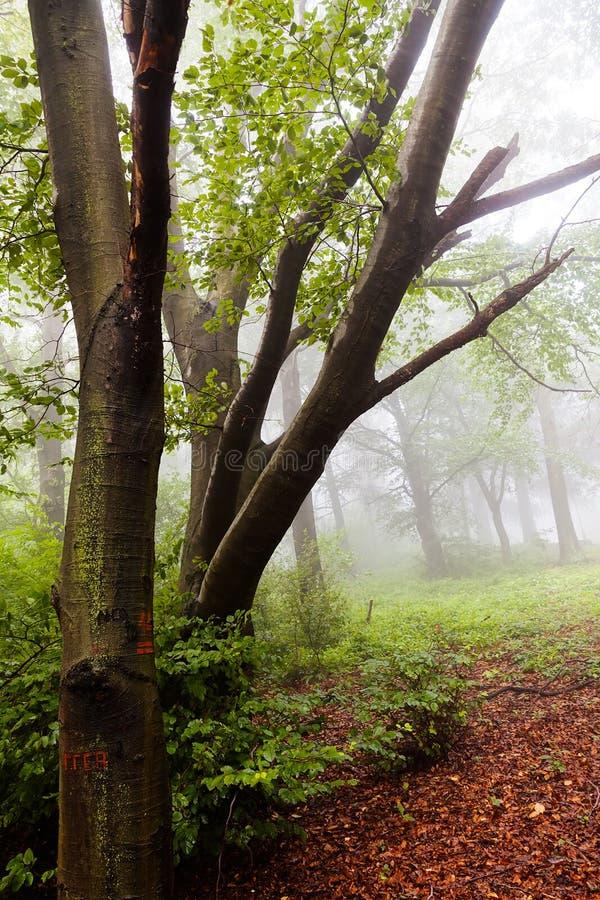 Bosque del otoño trayectoria-más cercano fotografía de archivo