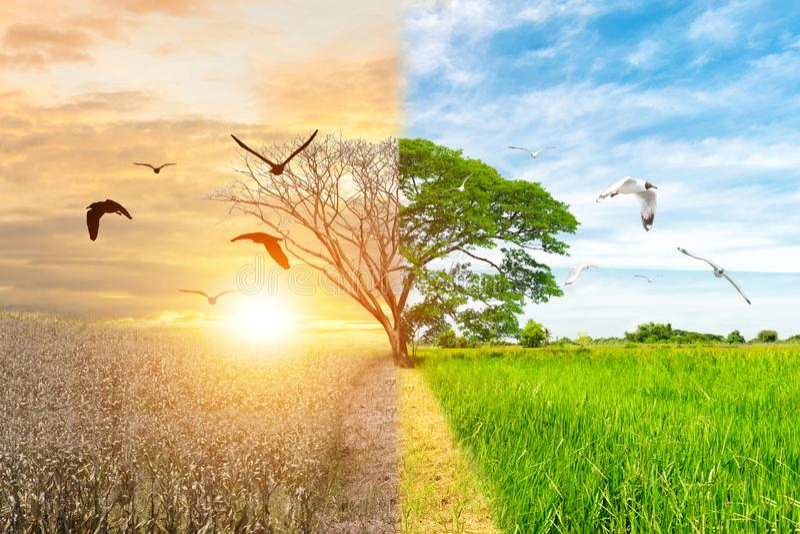 Bosque del pájaro de la sequía y de vuelo del bosque del árbol del cambio del ambiente del concepto de la ecología foto de archivo