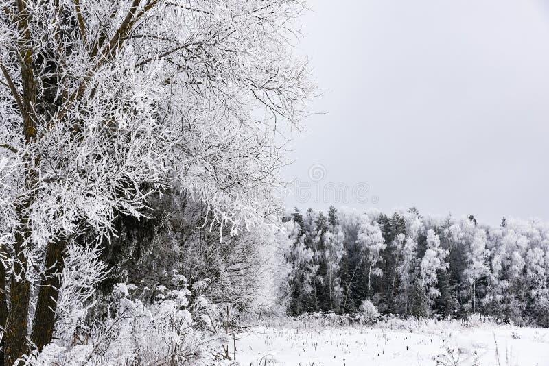 Bosque del paisaje escarchado en invierno fotos de archivo libres de regalías