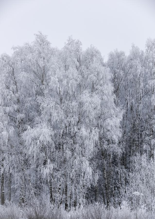Bosque del paisaje escarchado en invierno imágenes de archivo libres de regalías