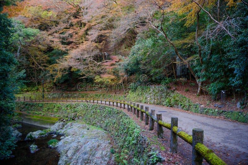 Bosque del paisaje del otoño en la cascada de Minoo, Osaka, Japón fotografía de archivo
