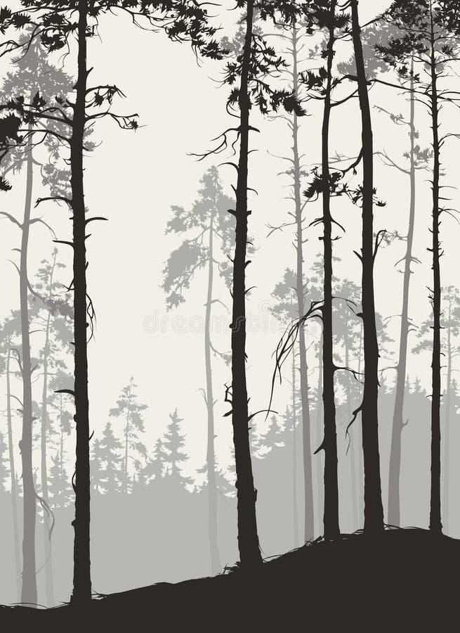 bosque del pino stock de ilustración