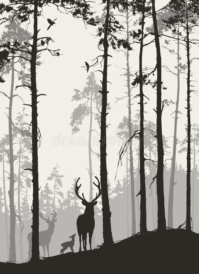 Bosque del pino de а con una familia de ciervos y de pájaros ilustración del vector