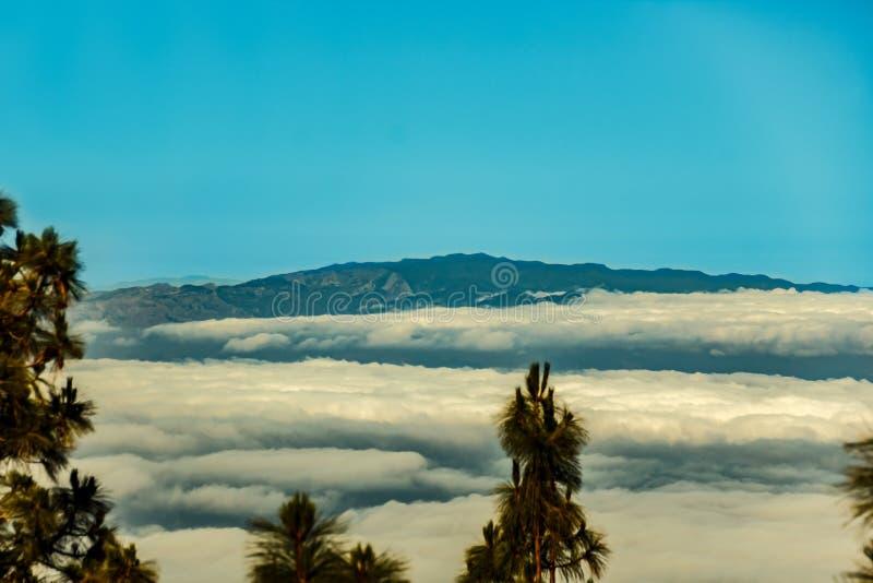 Bosque del pino de Tenerife, silueta de las islas del La Gomera y de IL Hierro en fondo Vea a partir de 1900 la altitud de m Tiro imágenes de archivo libres de regalías