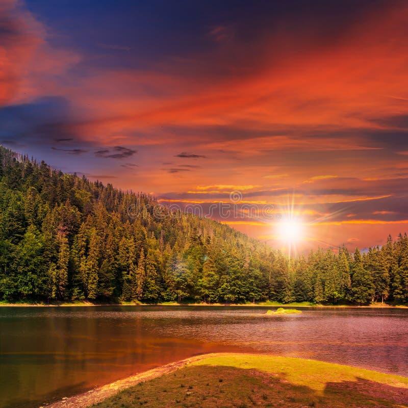 Bosque del pino y lago de la montaña en la puesta del sol fotografía de archivo