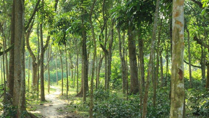 Bosque del pueblo con el estrecho al camino de trabajo imágenes de archivo libres de regalías