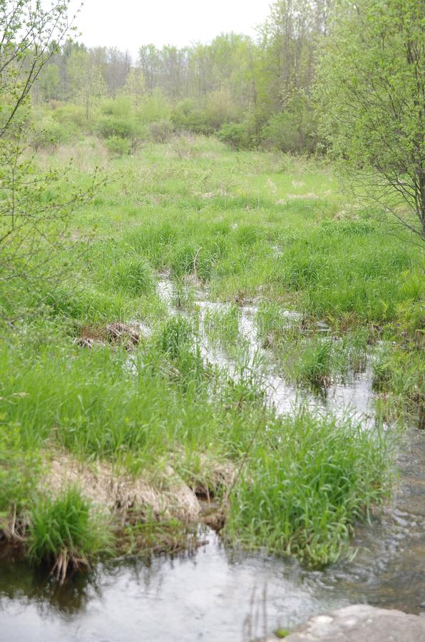 Bosque 4 del Trillium imagen de archivo