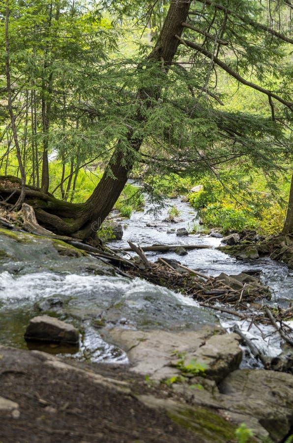 Bosque 7 del Trillium fotos de archivo libres de regalías