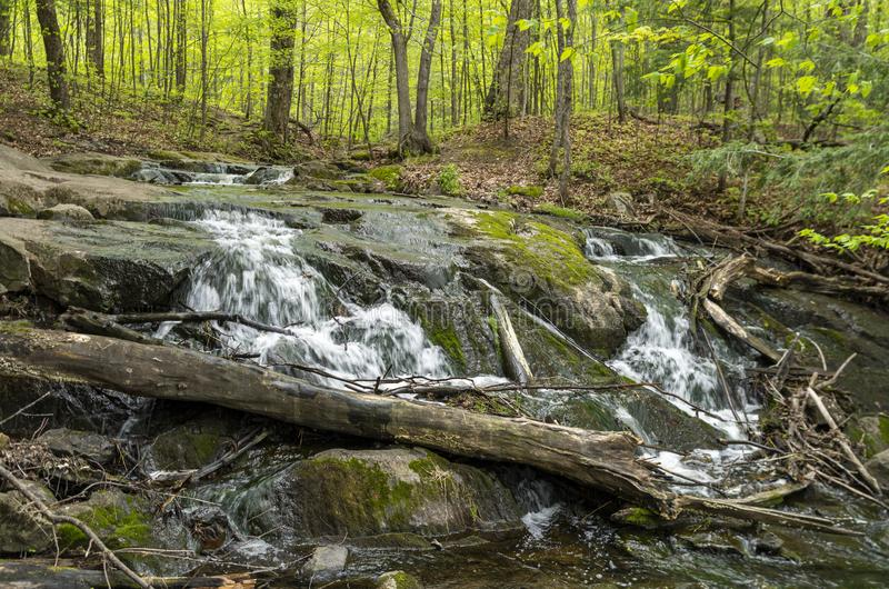 Bosque 8 del Trillium fotos de archivo