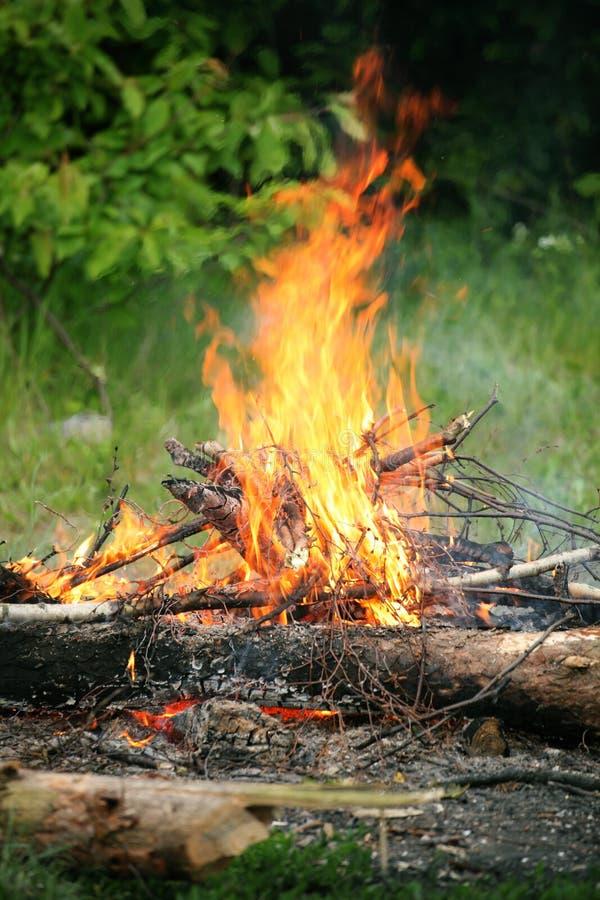 Bosque del verano del fuego de la hoguera de la hoguera fotografía de archivo libre de regalías