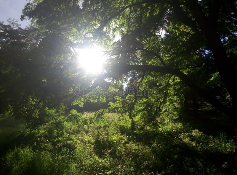 Bosque del verano en Kiev fotos de archivo