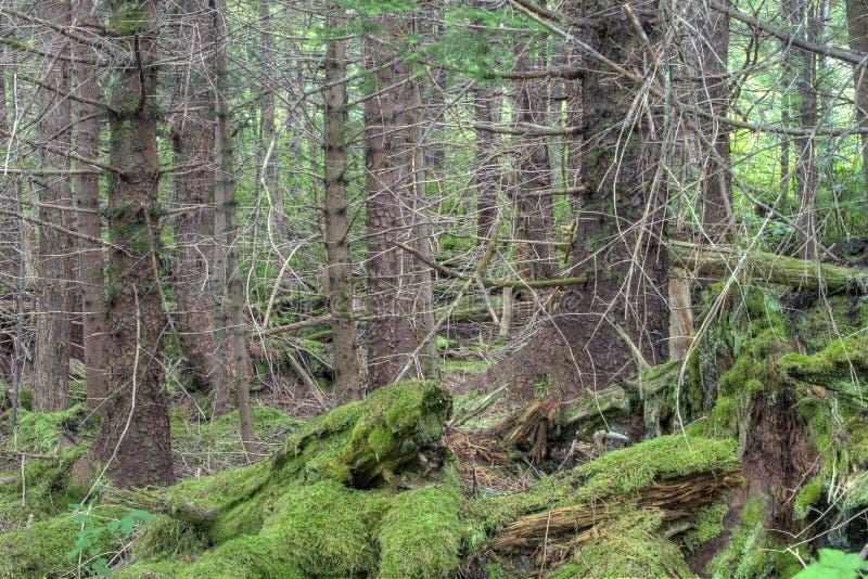 Bosque denso fotos de archivo