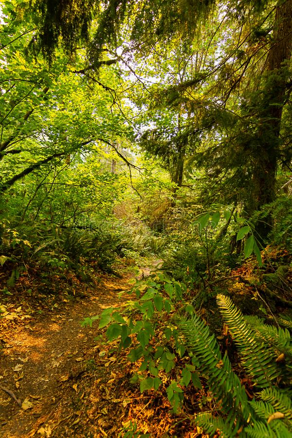 Bosque denso enorme alrededor del pequeño sendero de la suciedad en verano fotos de archivo libres de regalías