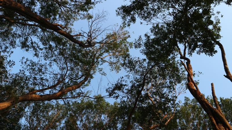 Bosque denso, los pulmones del mundo fotografía de archivo libre de regalías