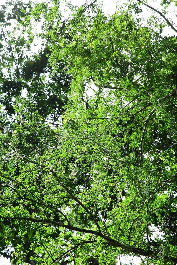 Bosque denso tropical natural foto de archivo libre de regalías